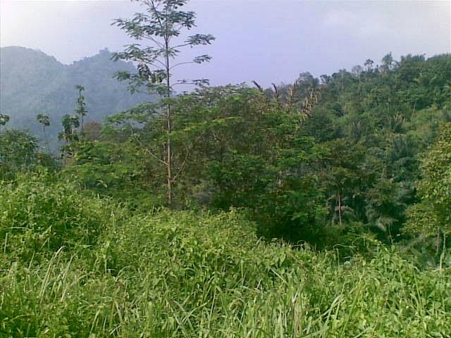 Foto(5082) Jual Tanah | Tanah Di jual, luas 4,25 ha kebun jual tanah di puncak