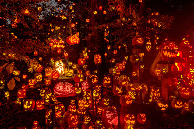 hundred of carved pumpkins lit up with different faces showing