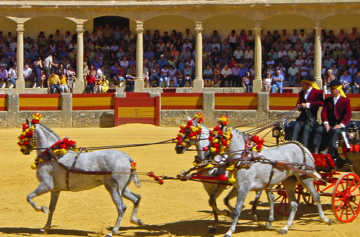 Toros Libres Travel Around Spain Bullfighting Spain At Its Purest