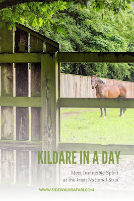 Things to do in Kildare: The Irish National Stud