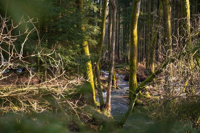 Felsentour Herbstein | Extratour Vogelsberg | Wandern in Hessen 16