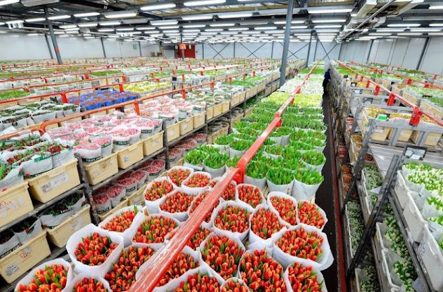 Albanian fruit and vegetable producers at Thessaloniki Fair