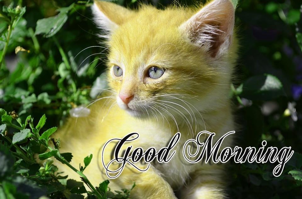 funny good morning sayings
