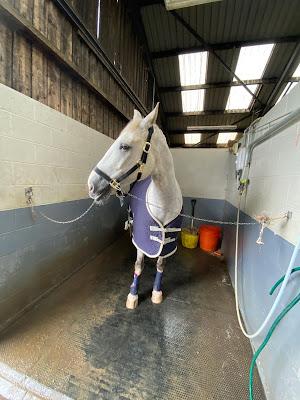 Équipe Tunnah Equestrian - Baignade pour le dressage
