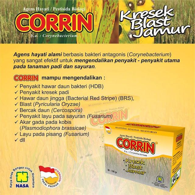Corrin Dapat mengendalikan penyakit Hawar Daun (HDB) atau penyakit kresek yang menyerang padi akibat dari bakteri patogen yang bernama Xamthomonas Oryzae