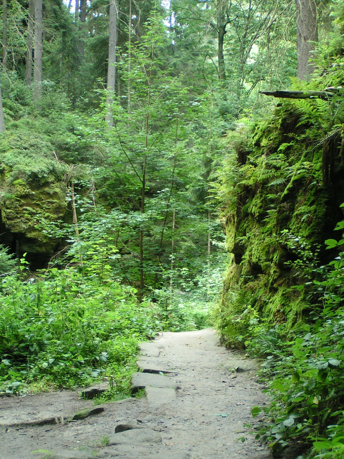 Japanese Zen Garden Zen Path