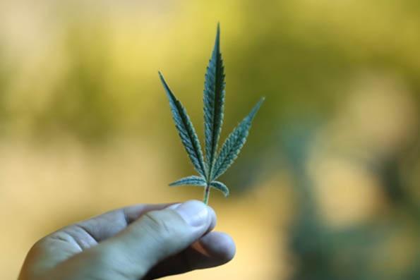 Israeli pharmacies begin selling medical marijuana products