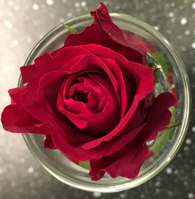 rose-in-a-glass