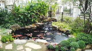 Diễn đàn rao vặt tổng hợp: Tham khảo tác dụng của thiết kế sân vườn tại nhà Ca-koi-7