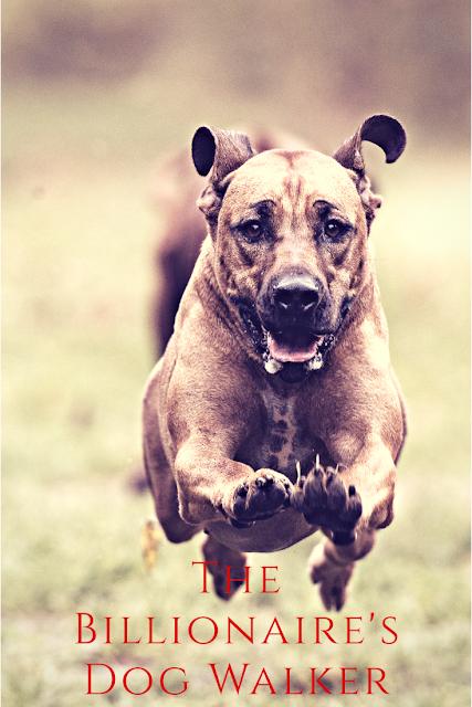 The Billionaire's dog Walker