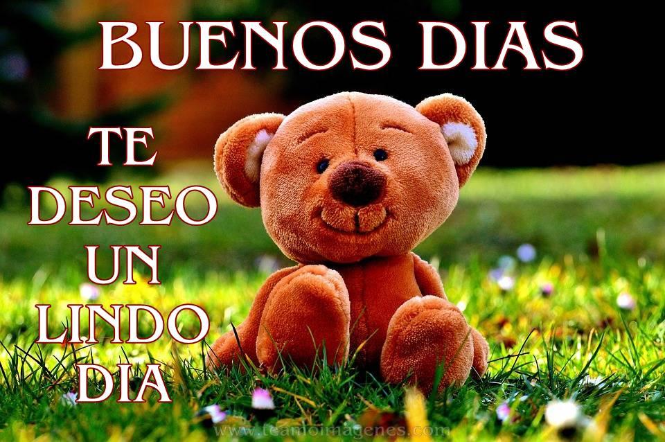Frases De Amor Con Imagenes De Buenos Dia: 24 IMÁGENES DE BUENOS DÍAS AMOR CON FRASES BONITAS (OSITOS