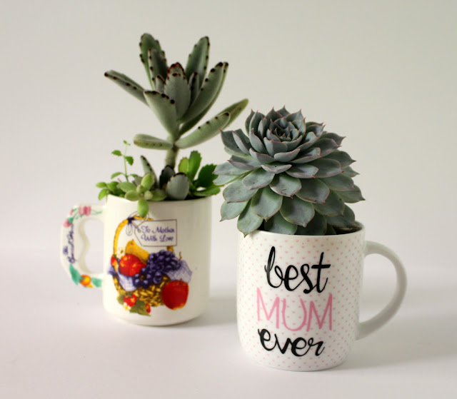 Succulents in mugs Mothers Day gift