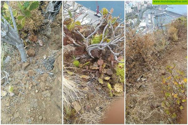 Retiran los residuos de las obras de seguridad del Risco de La Concepción
