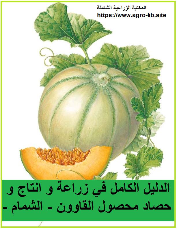 كتاب : الدليل الكامل في زراعة و انتاج و حصاد محصول القاوون - الشمام -