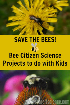 bee citizen science