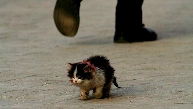 Котенок плакал, но спасти кроху не могли, он очень боялся людей