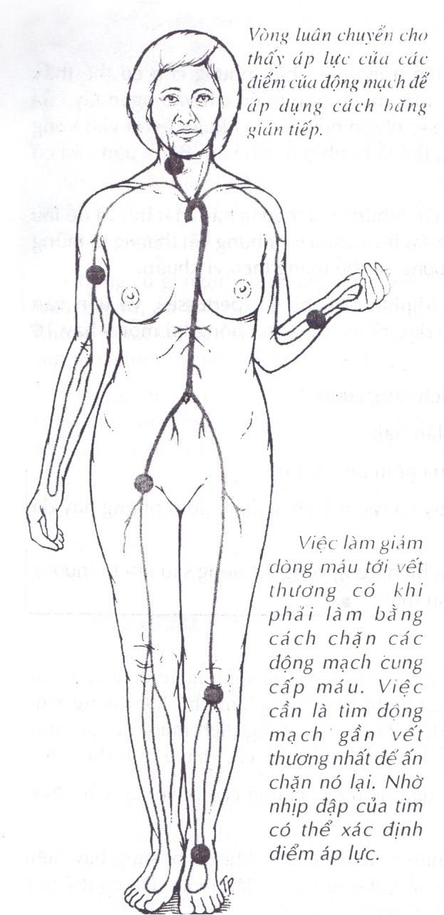 Sơ đồ động mạch trong cơ thể con người