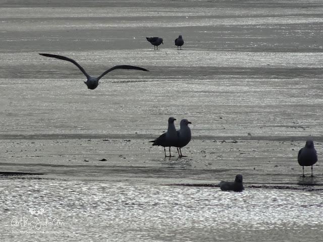 Gulls Icy Lake Print