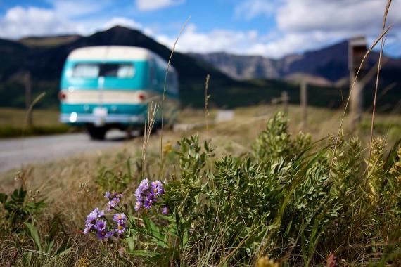 Ground-level view of flowers and grass, van on road blurry in background
