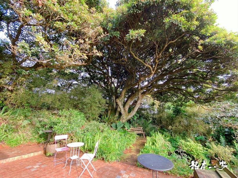 陽明山秘境景觀咖啡廳「山上聊」cafe森林系下午茶