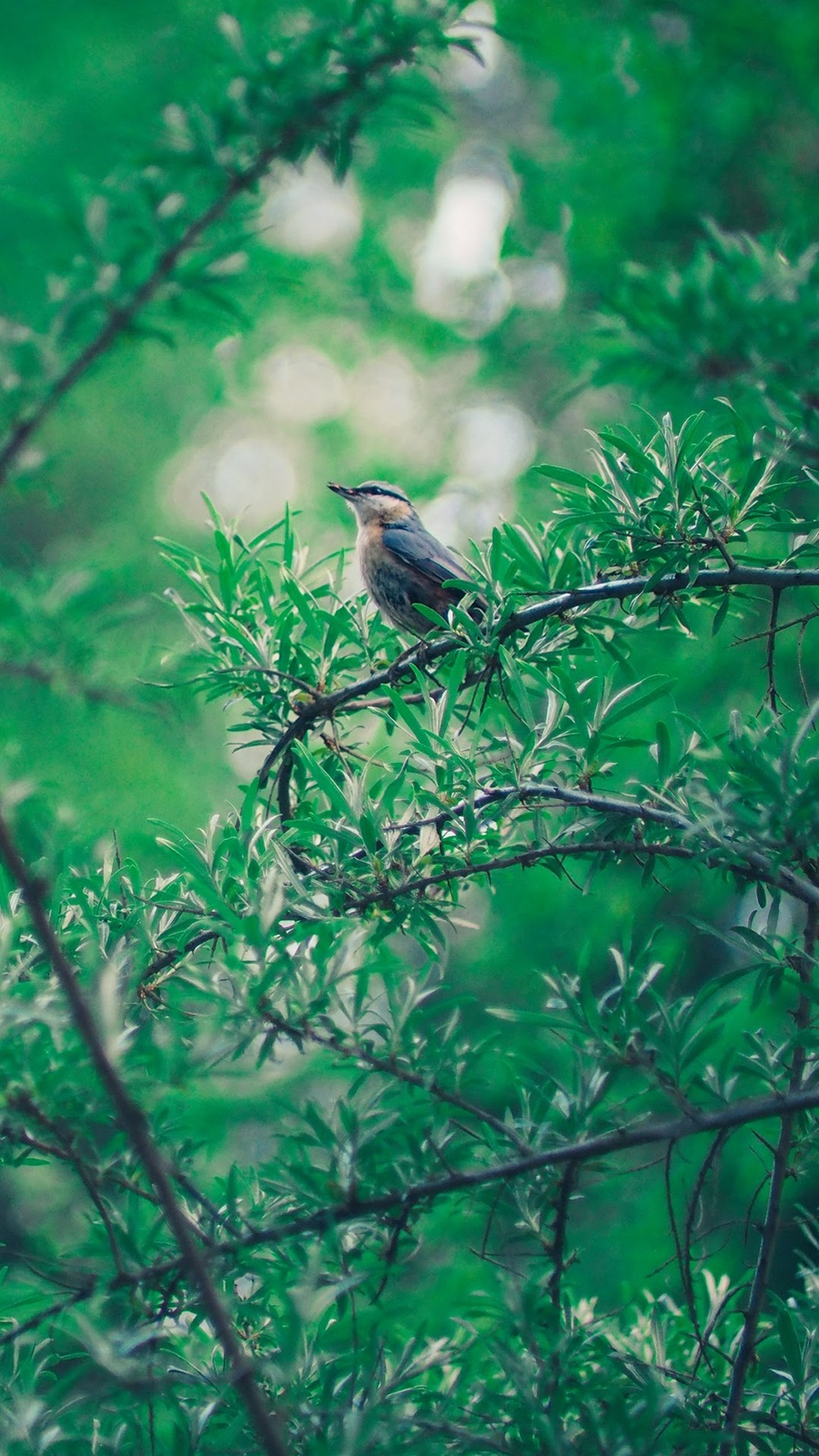 BIRD IN FOREST
