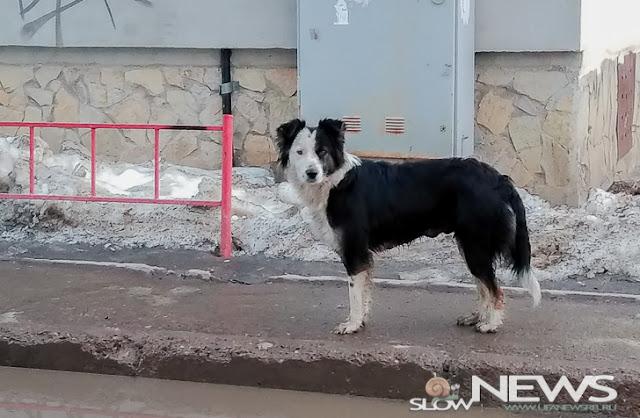 В Уфе на отлов животных выделили около 8 миллионов рублей