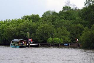 hutan mangrove alas purwo