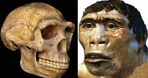 Manusia Purba Pithecanthropus Erectus : Pengertian, Gambar ...