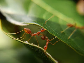 ants bringing food with difficulty can inspire you not to get tired and keep on working towards the goal