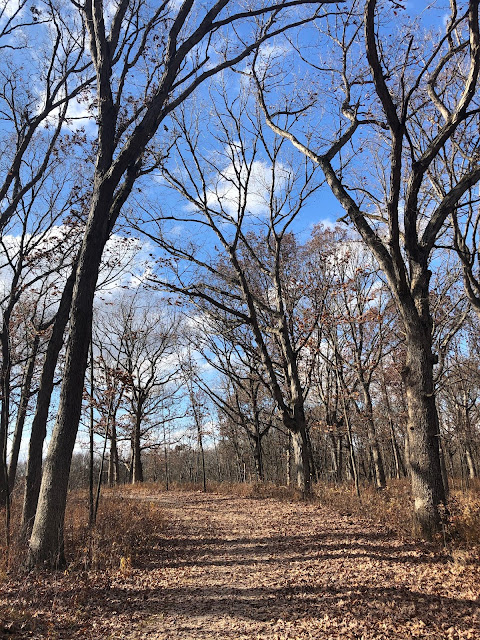Embarking on a wooded path at Goodenow Grove Nature Preserve under the late fall sun.