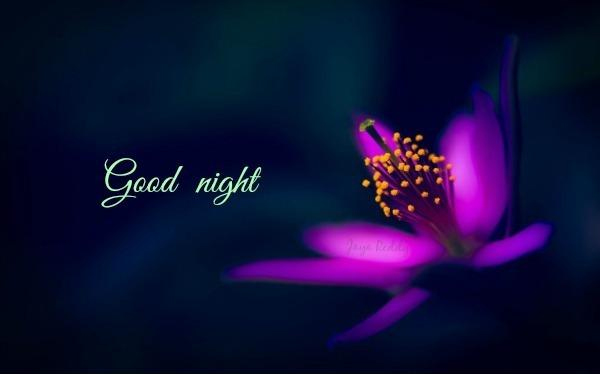 Best 99 Good Night SMS in English Whatsapp