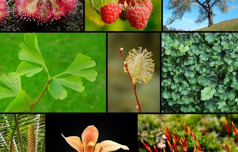 nama tumbuhan dalam bahasa arab