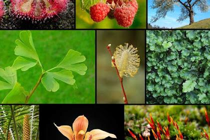 100 Nama Tumbuhan dalam Bahasa Arab