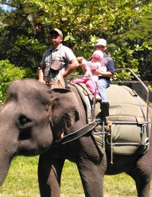 manfaat ke kebun binatang bagi anak-anak