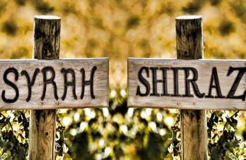 Generalidades del vino tinto Syrah