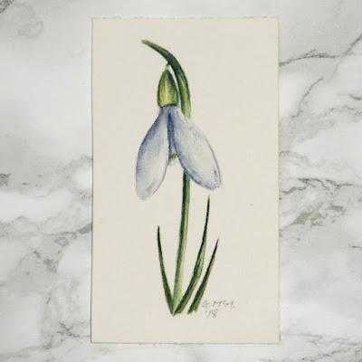 Snowdrop watercolour sketch