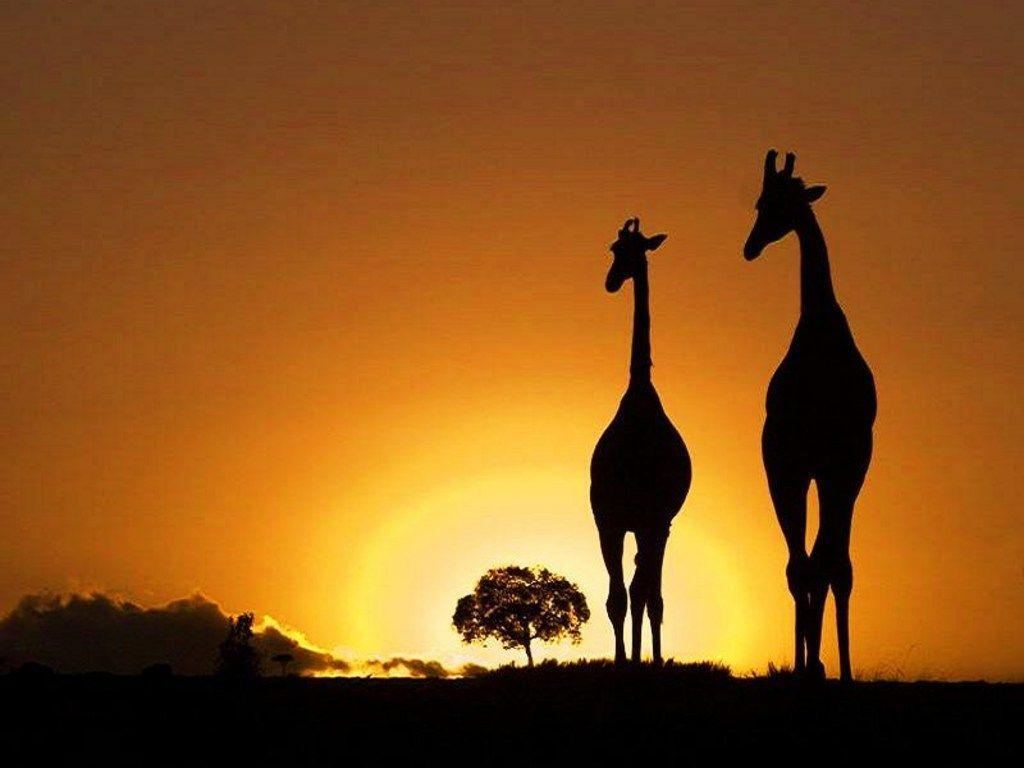 Africa Wallpaper, wallpaper, Africa Wallpapers hd wallpapers