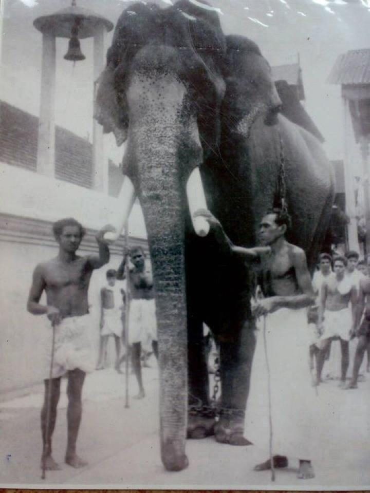 Very Old and Rare Photos, Pictures of Kerala, India: KING ...