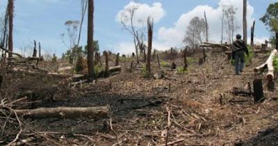 hutan gundul nganjuk kekeringan