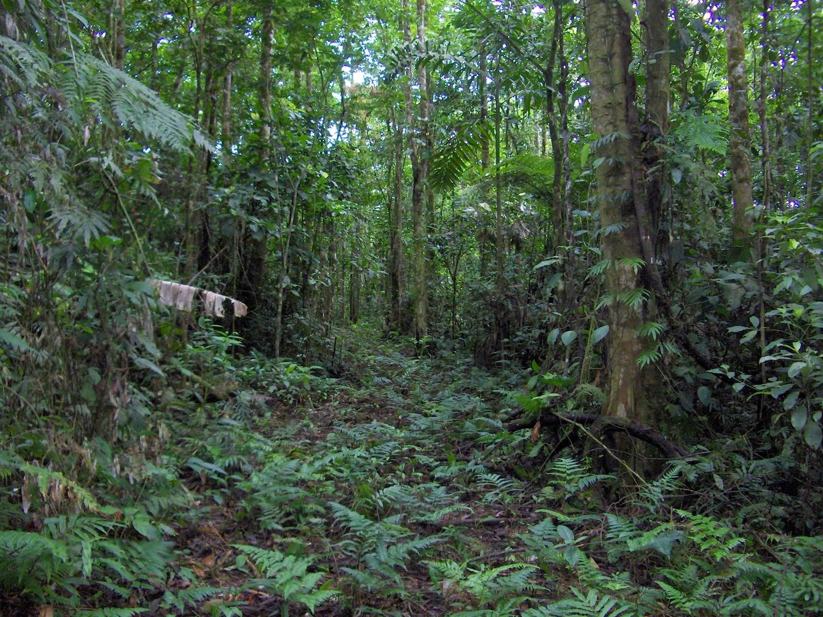 Dp Uang Baru 80juta Lucu: Tanah Kampung Di Bangka