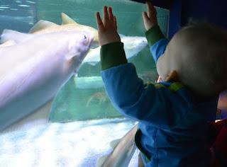 Aquarium im Sealife