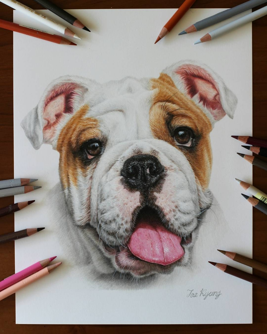 08-Bulldog-Jae-Kyung-Cute-Kittens-and-Puppies-Drawings-www-designstack-co