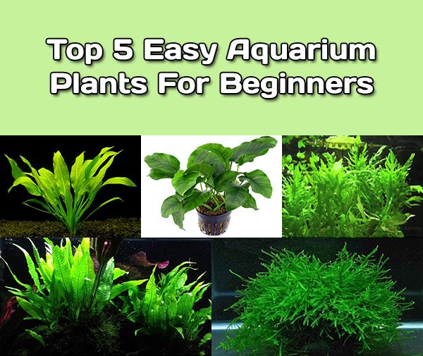 Top 5 Easy Aquarium Plants For Beginners