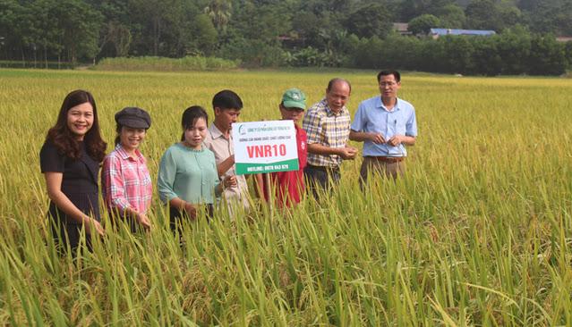Thái Nguyên :  Đánh giá kết quả mô hình gieo cấy giống lúa mới