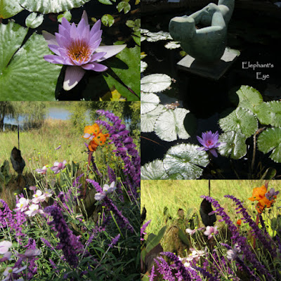 Blue water lily Mexican sage, Japanese anemone and canna in Tokara garden