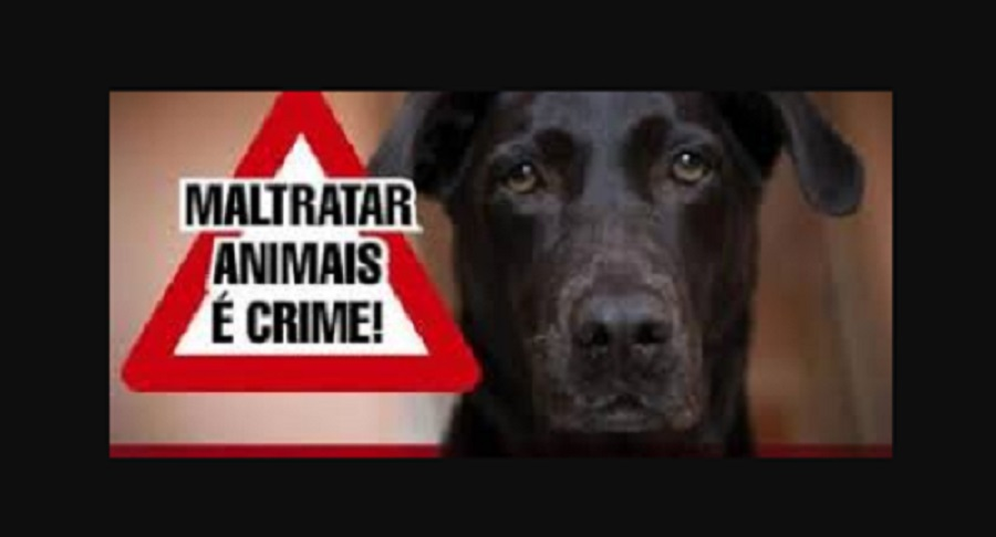 Homem é detido suspeito de abusar sexualmente de cadela em Toritama, PE