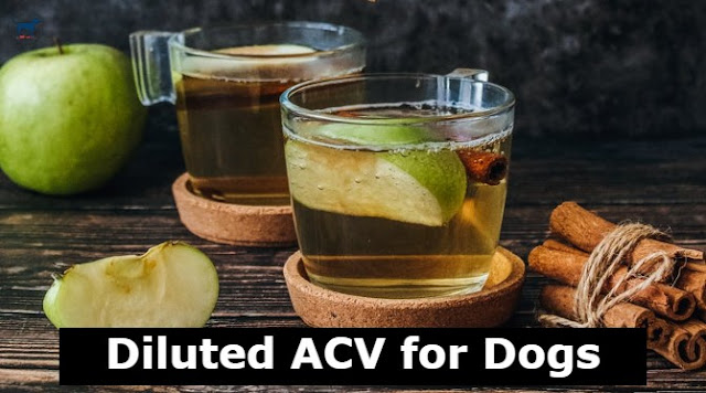 apple-cider-vinegar-for-bacterial-infections-of-dogs