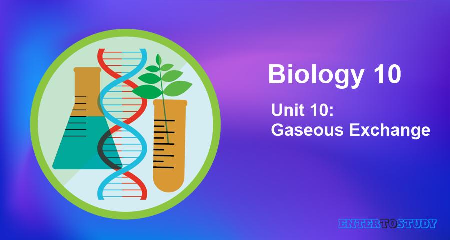 KIPS 10th Class Biology Notes Unit 10: Gaseous Exchange