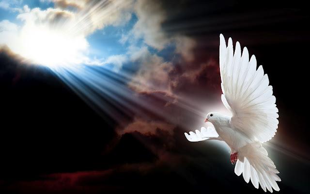 Foto van een vliegende witte duif met zonlicht