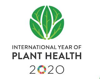 Festival della salute delle piante